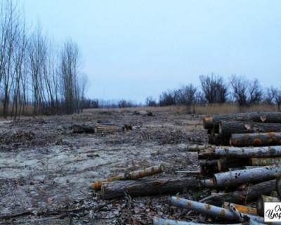Украинские солдаты вырубают лес на границе с Крымом