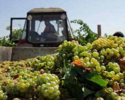 В Севастополе планируют сформировать гастрономическую культуру потребления вина