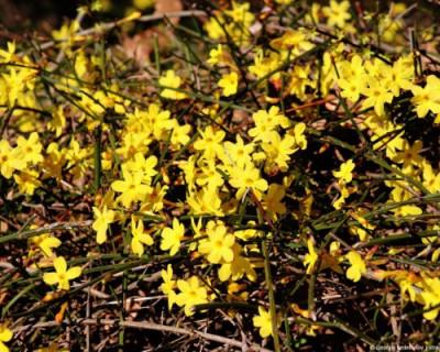В Крыму весна, цветут цветы (ФОТО)