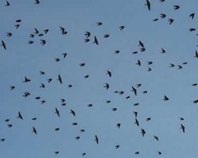 Как птица обесточила часть Симферополя