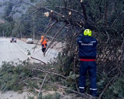 В Крыму падают деревья и разрушают дома (ФОТО)