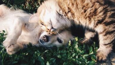 В Севастополе закрыли сайты по отравлению бродячих животных