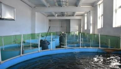 Севастополь наращивает объемы производства аквакульуры