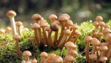 Житель Тверской области собрал в лесу грибы и попал в колонию