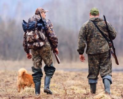 Российские чиновники посчитали лосей, соболей, косуль и прочих ценных животных
