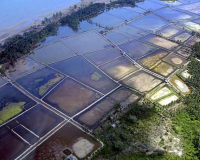 Крымчане пожаловались Поклонской на строительство креветочной фермы