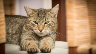 В Симферополе введен карантин из-за бешенства котов