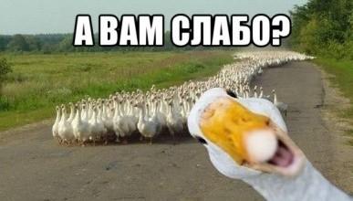 Севастопольская группировка «ФППТДКН»  решила по-лёгкому «подзаработать» 7 млн. рублей. А вам слабо?