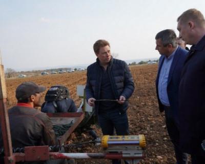 Аграрии АО «Артвин» на 40 гектарах заложили виноградники «мерло» и «каберне»