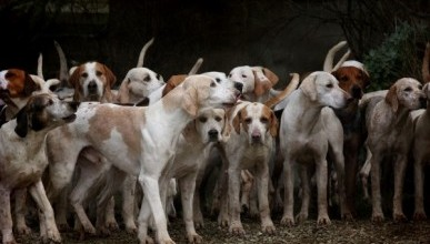 Стая бродячих собак загрызла пенсионерку