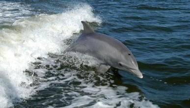 Жители поселка Кача обнаружили мертвых дельфинов и забили тревогу