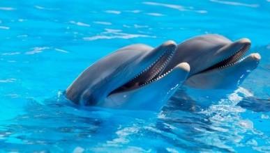 Почему в Севастополе массово гибнут дельфины? (ФОТО)