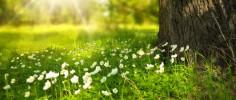 В Крым возвращается теплая весна