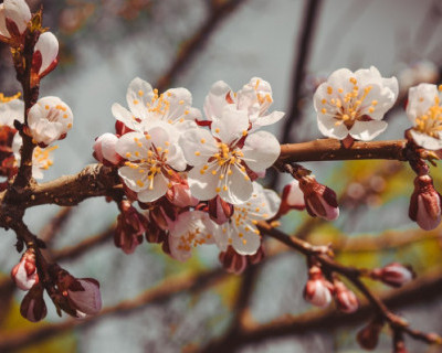 Как севастопольцы должны вести себя на Пасху и майские праздники?