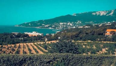 Как Мальцев построил в Крыму хрустальный дворец и винзавод, высадил виноградник из 85 тыс.лоз, а суд признал его умалишенным