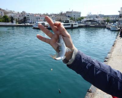 Какую рыбу ловят севастопольцы в самом центре города-героя? (ФОТОРЕПОРТАЖ)