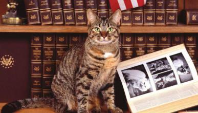 Как кошка чуть не лишила американку выигрыша