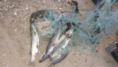 В Севастополе задержали браконьера