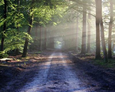 Что скрывают севастопольские леса? (Часть 1)