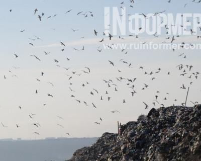 Где в Севастополе «живет» мусор (фото, видео)
