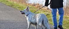 Россиянам угрожает собачья болезнь