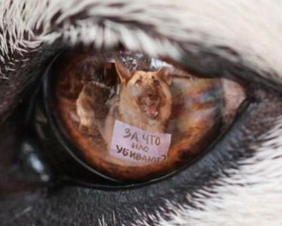 Жуть! Под Севастополем зверски убиты пять щенков из пистолета