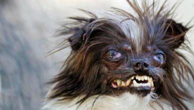 Список самых опасных пород собак в России