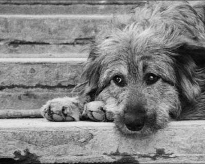 """Защитники животных: """"В Севастополе происходит намеренное уничтожение собак неизвестными лицами"""""""