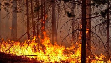 Кто виноват в лесных пожарах в Крыму?