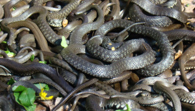 Крымчан атаковали змеи