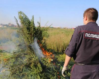 Полиция Севастополя раскрыла 14 преступлений, связанных с наркотиками