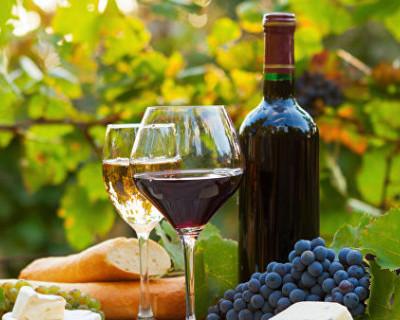 Виноградари и виноделы Севастополя реализуют свои инвестпроекты