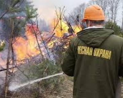 Животные Сибири вырываются из огненной тайги (ВИДЕО)