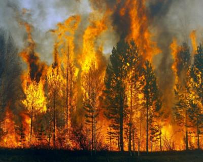 Кто виноват в лесных пожарах?