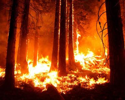Сибирские леса продолжают гореть