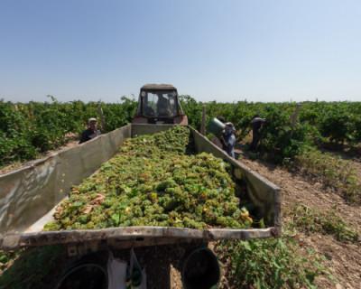 В СевГУ состоялся первый набор будущих виноградарей и виноделов