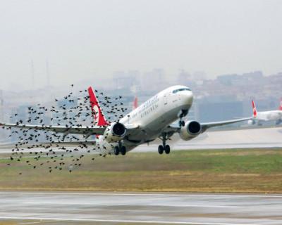 Самые крупные авиакатастрофы, которые произошли из-за птиц