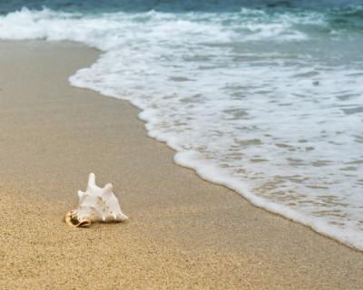 Пляжи оборудуют видеокамерами