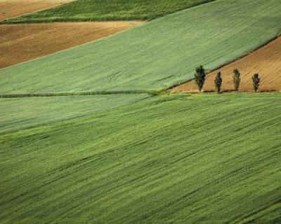 Более 200 севастопольцев готовы выкупить землю по льготным ставкам