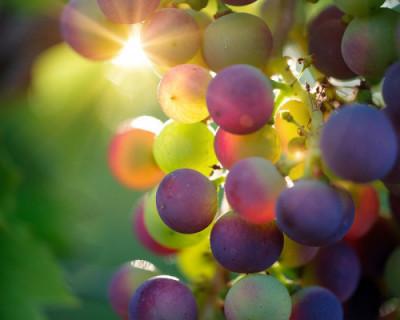 Успешная премьера от «Золотой Балки»: первая линейка резервных вин (ФОТО)