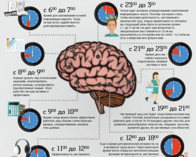 Распорядок работы мозга в течение дня