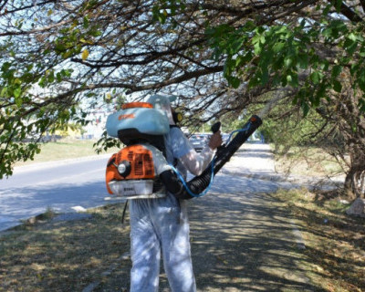 В Севастополе ведется борьба с бабочкой