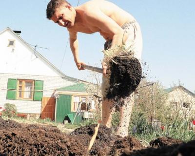 """""""Возглавить любой ценой"""".  Имитация бурной садоводческой деятельности в Севастополе продолжается..."""