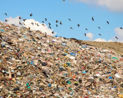 На что ушли 15 миллионов рублей, выделенных на борьбу с мусором в Крыму