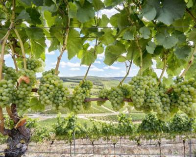 В Севастопольский винодельческий завод поставлено современное оборудование