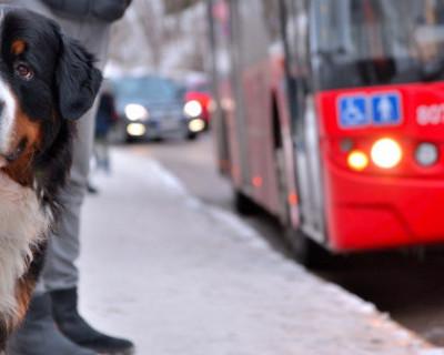 В Севастополе покупателям не придётся идти с сумками почти полтора километра до транспорта