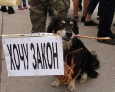 Ожидаемо? Более сотни работников рыбоконсервного завода провели сегодня пикет перед зданием правительства Севастополя