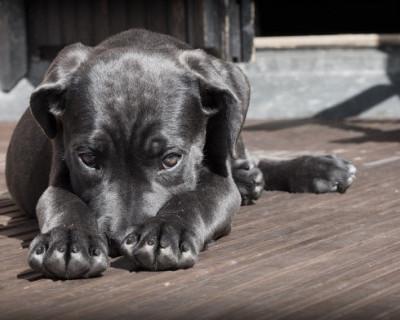 Названо число крымчан, которые пострадали от укусов бездомных животных