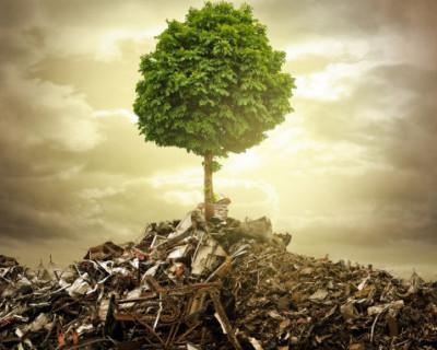 Севастопольцы, сдайте мусор и посадите дерево!