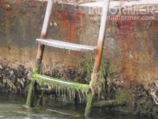 подходы к воде поросли тиной